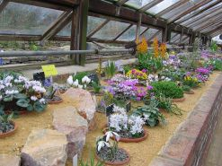 800px-Alpine_House_at_Wisley_5722